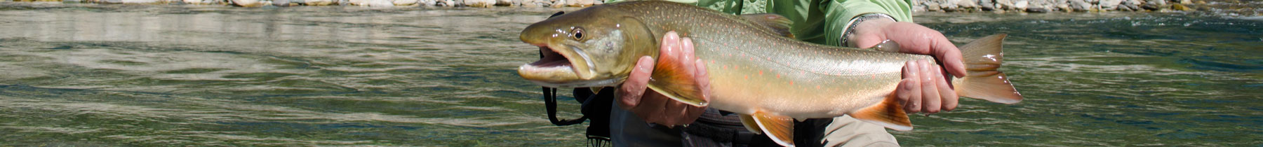 General Info | Guided Fly Fishing in Fernie BC at Fernie Wilderness Adventures