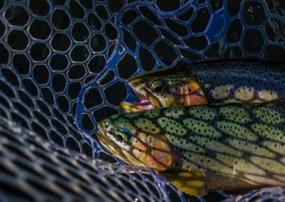 Guided Fly Fishing on the Elk River with FWA Fly Fishing (6)